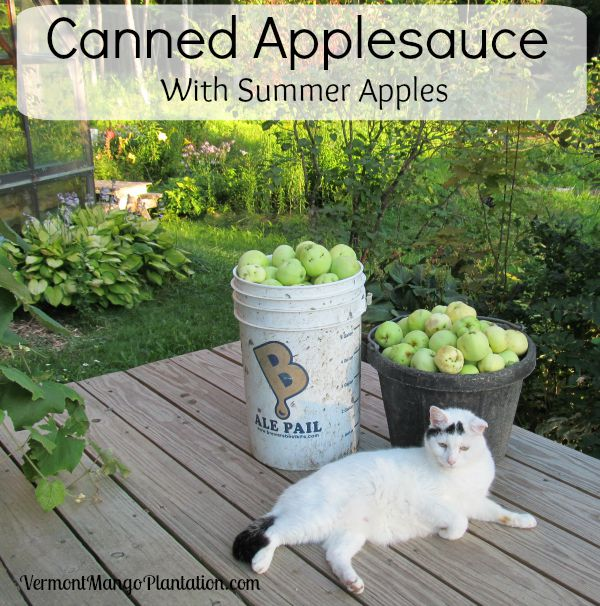 Canned Applesauce With Summer Apples